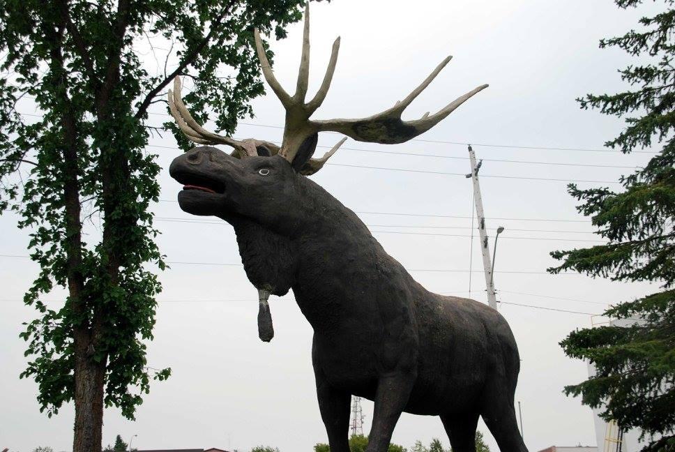 dryden max moose festivals